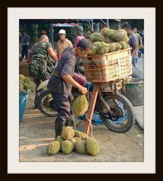 Harvesting durians. Kampung Sempeneh, Batu Kurau, Perak, Malaysia. #Durian #Kingoffruits #Rainforesttree Malaysia Truly Asia, Harvest