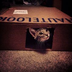 """DIY Kitten Carboard House. Find a cardboard box, cut square on side and voila!!! It's the """"Hot-Look"""" for kittens...it's in right now. #cats #kitten #cardboard #DIY"""
