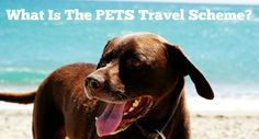 What is the PETS travel scheme? How do you take your pet abroad to Europe. #dogs #pets