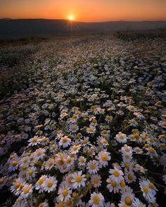 Daisy Wallpaper, Sunflower Wallpaper, Flower Phone Wallpaper, Iphone Background Wallpaper, Smile Wallpaper, Aesthetic Pastel Wallpaper, Aesthetic Backgrounds, Aesthetic Wallpapers, Flower Pictures