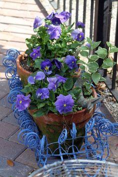 Purple pansies in blue wired basket. Pretty.