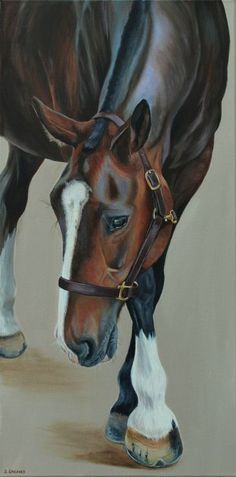 Gentle George by Stephanie Greaves - A beautiful thoroughbred x cob gelding I met last summer, George has been the subject of a commissioned painting and now this original.