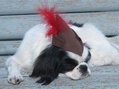 Dog Hat, Robin Hood, Small. $6.50, via Etsy.