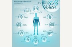 Water in Body. Water Infographic. $3.00