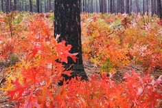 weymouth woods sandhills nature preserve - Google Search