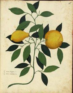 botanical lemon printable