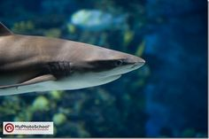 How to Photograph Animals/Fish Behind Glass