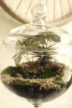Terrários: Mini ecossistemas cultivados em recipientes de vidro. – Anavidro – Associação Nacional de Vidraçarias