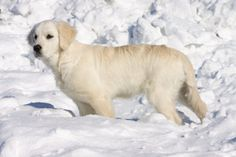 Protect outdoor dogs in the winter
