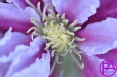 Makro-Blüte | FeenArt | Claudia Böttcher | DSC_6107FAFGk