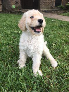 When your new pupper is cute AF. Reddit meet Barney. http://ift.tt/2s9t9iI
