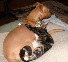 i love it when cats and dogs snuggle