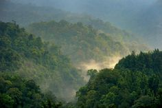 Early morning in Gede Pangrango forest West Java, Indonesia. Photo by Ricky Martin/CIFOR via WSJ