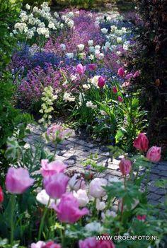 Paars, wit en roze in de tuin