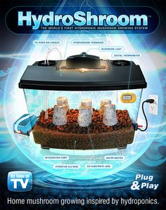 Spores Mushroom Spores Grow Kits mushroom spores syringes psilocybe mushrooms syringes edible mushroom prints or spore syringes or mushroom grow kits > HydroShroom Mushroom Growing System Growing Mushrooms At Home, Garden Mushrooms, Edible Mushrooms, Stuffed Mushrooms, Mushroom Grow Kit, Mushroom Fungi, Psilocybin Mushroom Spores, Hydroponic Growing, Hydroponic Gardening