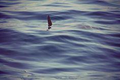 #whalewatching #Ventotene