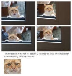 Awwww! Poor distressed cat. His facial expressions look so human.