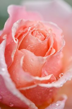 Pink Flowers Garden Love