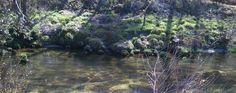 Condições de pesca no Rio Alfusqueiro.
