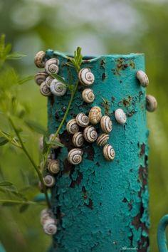 Je collectionnais les escargots et avec mes frères on organisait des courses