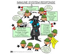 Immune System Response | Nursing Mnemonics and Tips