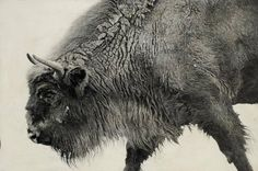 European bison by Vicky White, pencil on primed panel - © Vicky White/Jonathan Cooper Park Walk Gallery Pencil Drawings Of Animals, Animal Sketches, White Bison, European Bison, African Bush Elephant, Amur Leopard, Art Of Man, Art Corner, Galleries In London