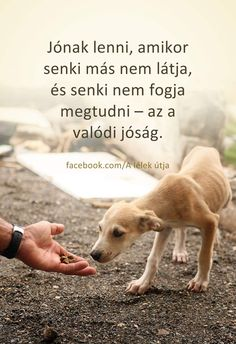 Légy jó még akkor is ha mások nem látnak. Dog Quotes, Qoutes, Life Quotes, Motivational Quotes, Inspirational Quotes, Life Is A Journey, Life Motivation, Love Life, Picture Quotes