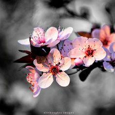 eltthoughts: Silent Spring
