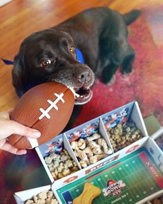 """What do you get when you take a Sunday afternoon in February, remove the men in tight pants, and add PUPPIES plus snacks galore?! The #PuppyBowl on @AnimalPlanet! #ad ⠀⠀⠀⠀⠀⠀⠀⠀⠀ Lucy says, """"You had me at snacks!""""😍 ⠀⠀⠀⠀⠀⠀⠀⠀⠀"""