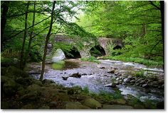 Going to camp here this summer with my Brother and Sister! Elkmont is the largest campground within Great Smoky Mountains National Park in Tennessee!