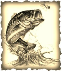. Bass Fishing Shirts, Fishing Tattoos, Fishing Signs, Bass Fishing Pictures, Fish Artwork, Stippling Art, Koi Fish Tattoo, Sweet Tattoos, Fish Drawings