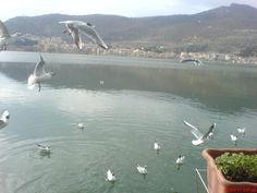 Beautiful Kastoria!!!!
