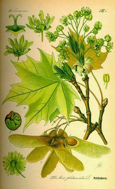 Бохо. В гармонии с собой: Ботанические иллюстрации