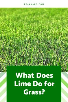 """"""""""" Find out the benefits of using lime on your lawn. Learn how to determine if your… """""""" Find out the benefits of using lime on your lawn. Learn how to determine if your grass needs an application of lime. Lawn Care Schedule, Lawn Care Tips, Lime For Lawns, What Is Lime, Centipede Grass, Organic Lawn Care, Lawn Care Business, Business Cards, Gardens"""