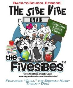 """FiveSibes """"The Sibe Vibe"""" on Dog Works Radio featuring """"Chili"""" the Therapy Husky!"""