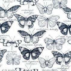 Navy White Butterfly Fabric Organic Cotton by MountainFabrics