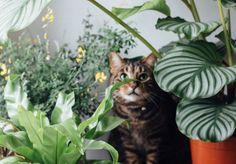 Een viervoeter in huis? Dit zijn 5 veilige planten voor huisdieren