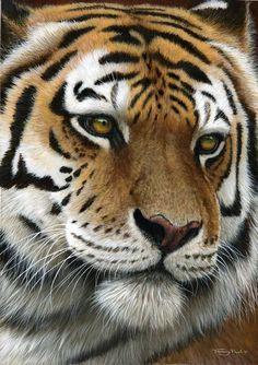 Tiger, by UK Wildlife Artist Jeremy Paul: