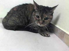 TO BE DESTROYED 5/2/14Brooklyn CenterMy name is STRIPES. My Animal ID # is A0996942. UPDATE: ***SAFE*** Pulled by Feline Rescue of SI- Donation website: http://felinerescueofstatenisland.webs.com/