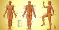 La thérapie par l'acupression, parfois appelée acupuncture par pression, est utilisée en Médecine Traditionnelle Chinoise depuis des milliers d'années. Elle consiste à appliquer des pressions sur les points d'acupression qui se trouvent le long des méridiens de votre corps pour favoriser la relaxation et traiter les maladies.Il existe plus de 400 points d'acupression sur le …