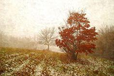 winter colors /II