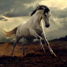 awesome white horse