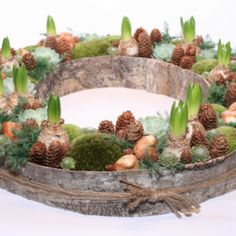 Air Plants, Natural Materials, Floral Design, Recycling, Interior Decorating, Christmas Decorations, Xmas, Easter, Spring