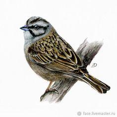 Birds 2, Color Pencil Art, Bird Design, Watercolor Paintings, Watercolors, Animal Drawings, Pastel Colors, Colored Pencils, Artwork