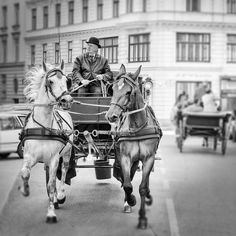 Horse and Carriage Wall Decor, Horse, Vienna, Austria, Horse Photography, Europe, Fine Art Photography, Wall Decor, Black and White - pinned by pin4etsy.com
