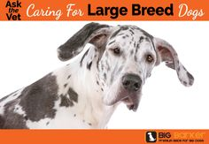 Ask The Vet: Caring For Large Breed Dogs