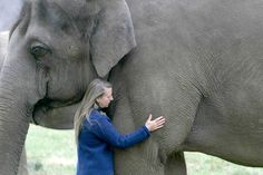 Carol Buckley  Carol Buckley, an international leader in the care and trauma recovery of elephants, is founder and President/CEO of Elephant Aid International.