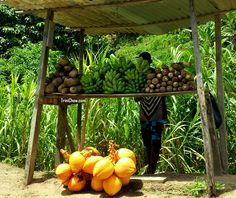 Elijah and his green figs, provisions and coconuts in Toco