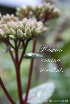 I grow as I am. www.runotalo.net