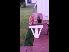 机の上にちょこんと座っていたネコが楽な座り方を発見した結果…(笑) | BUZZmag